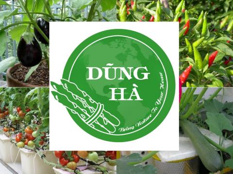 Các loại rau củ quả dễ trồng dễ chăm sóc tại nhà có thể trồng ngoài ban công