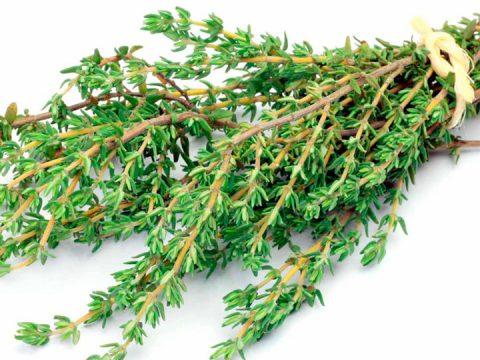 Sự khác nhau giữa 2 hương liệu trong món tây – Thyme và Rosemary