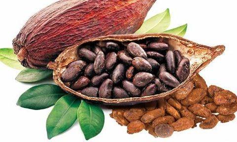 Bột cacao là gì? Tác dụng của bột cacao là gì?