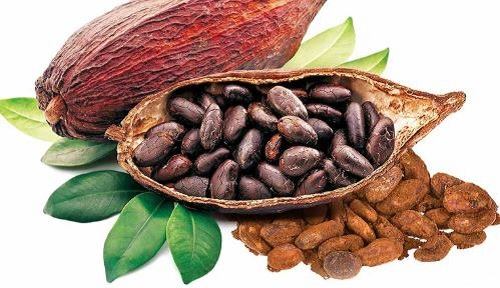 bột cacao là gì