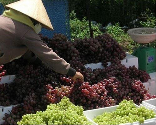 Cảnh báo các loại hóa chất bảo quản trái cây cực kỳ nguy hại