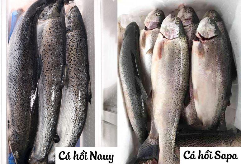 Cách phân biệt cá hồi nauy và cá hồi sapa